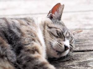 【今日から試せる】睡眠の質を上げる7つの方法
